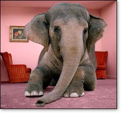 Elephants In The Living Room. Part 2